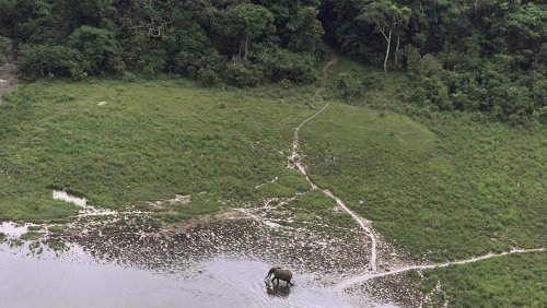 Norway is paying Gabon to protect the environment so it doesn't have to | View