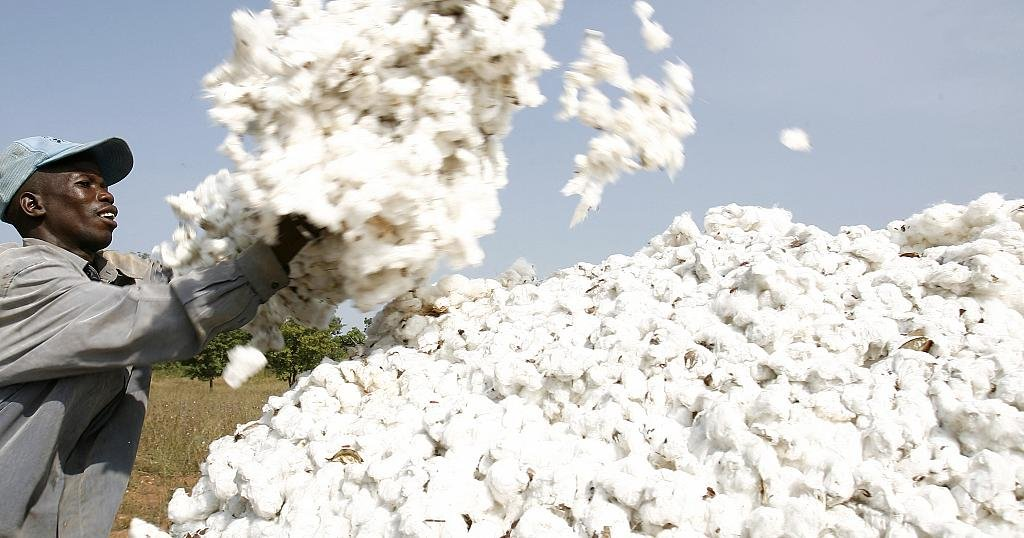 Togo wants to re-launch its cotton industry