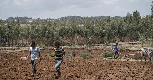 Massacres, war fuel ethnic fervour in Ethiopia's Amhara | Africanews