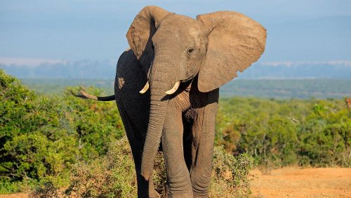 This is the algorithm that could save elephants from extinction