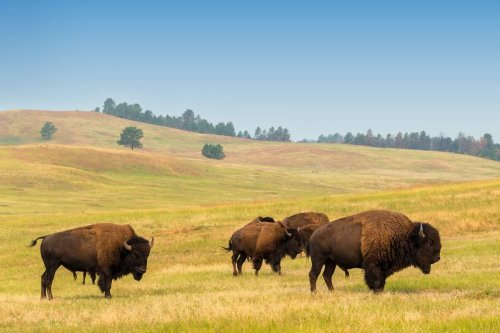 9 Phenomenal Places To See Animals In Yellowstone National Park
