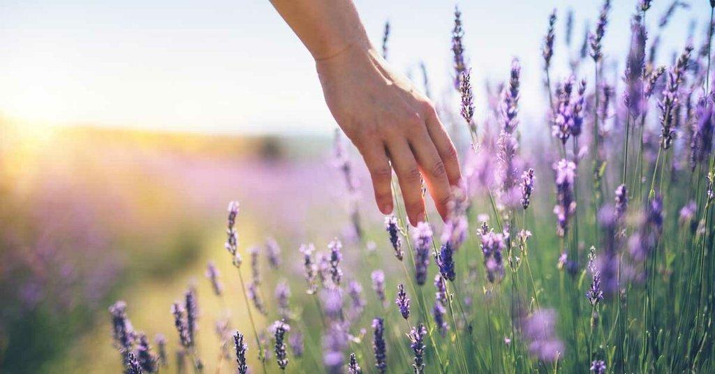 Çiçek & Bitki & Bahçe - cover