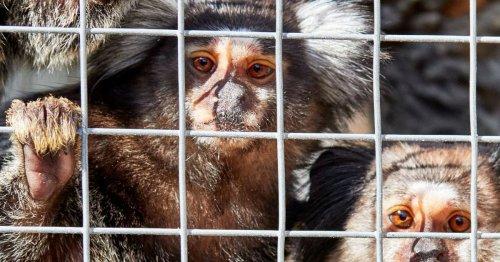Six monkeys rescued from Huddersfield home