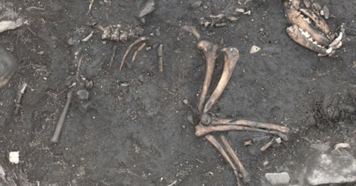 The weird things dug up by crews working on the A1 in Yorkshire