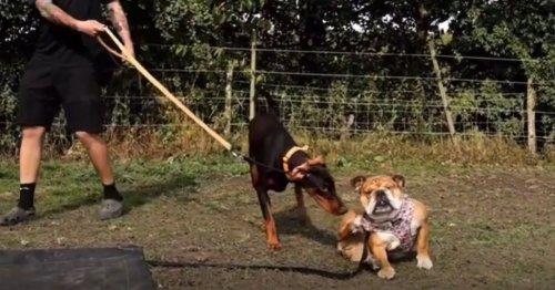 Three-legged abandoned dog is so traumatised she has lost all trust