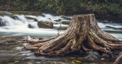 El diseño con ramas y troncos secos se abre camino en México y el extranjero