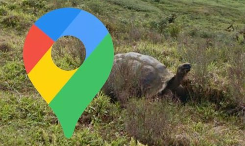 Google Maps Street View: 'Breathtaking' moment rare Galapagos tortoise is spotted