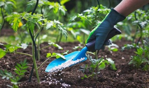 What should I feed my plants? The 3 nutrients plants need to grow