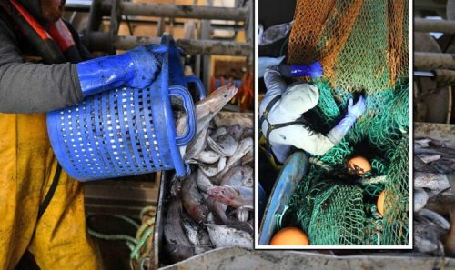 Fishing fury: New Brexit deal means 1,600 EU boats can plunder British water for 2021