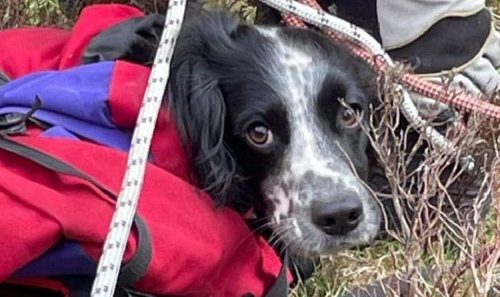 Springer spaniel puppy lives to bark another day after horror 300ft plunge down waterfall