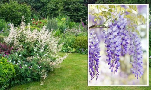 Gardening expert shares best plants for a low maintenance garden - and the ones to 'avoid'