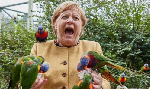 'I did well!' Angela Merkel swarmed by birds on final outing in her constituency