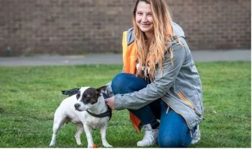 Loving little dog' saves owner in horror late night knife attack in Essex