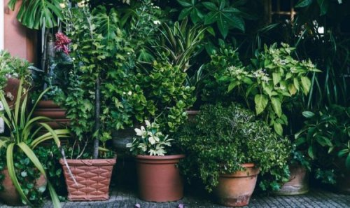 How to look after your plants when it's been raining – top tips for a glorious garden