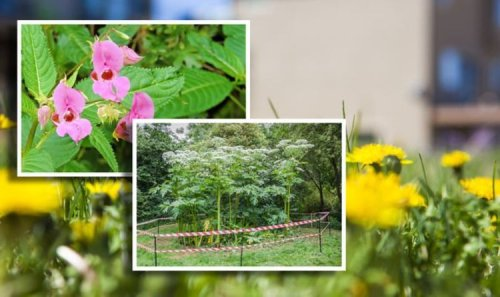 Are dandelions weeds? 6 plants you didn't know were weeds - and how to remove them