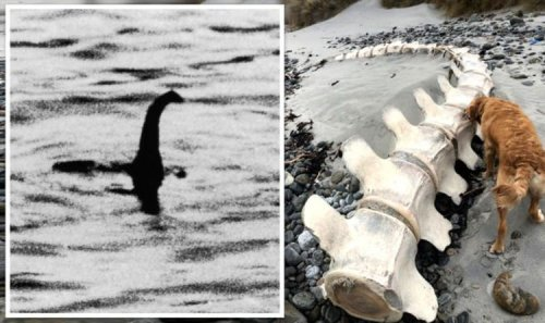 Nessie dead? Scot shares image of huge skeleton found on South Uist beach