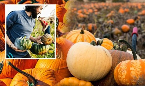 How to use leftover pumpkins - FOUR surprising ways to use pumpkins in the garden