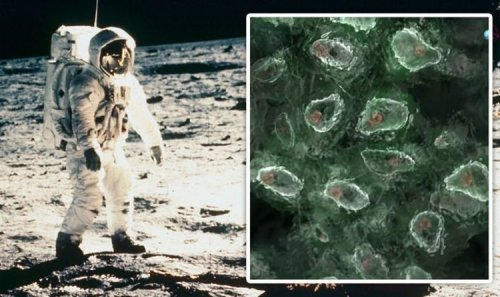 NASA Moon breakthrough: 'Living bugs' found on Apollo equipment brought back to Earth
