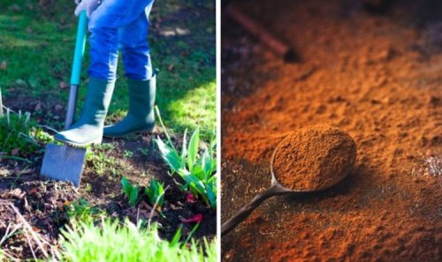 Gardening: Use natural products to liven up garden - cinnamon as a pest preventer and more