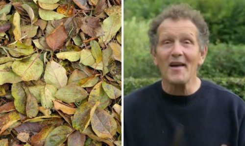 Monty Don: 'Nothing makes a better soil conditioner' - make your plants flourish for free