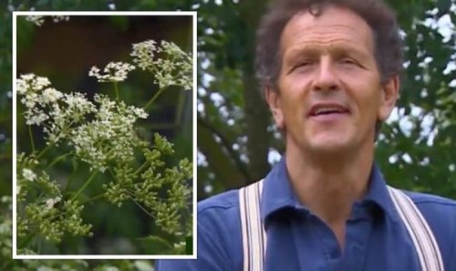 Gardeners' World: Monty Don warns Britons to 'wear gloves' when removing specific weed