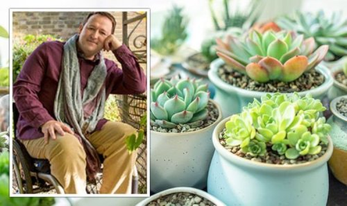 Gardening: BBC Gardeners' World presenter shares how to propagate succulents