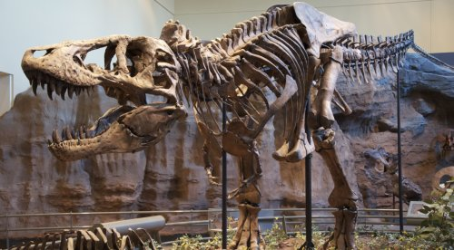 Researchers: 2.5 Billion Tyrannosaurus Rexes Walked the Earth - ExtremeTech