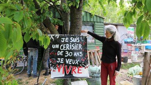 «On nous parle d'écologie, et on sacrifie l'espace vert au béton»: les potagers d'Aubervilliers menacés par un grand complexe aquatique