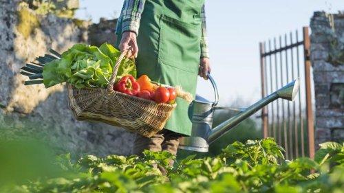Que planter, semer ou récolter en octobre ?