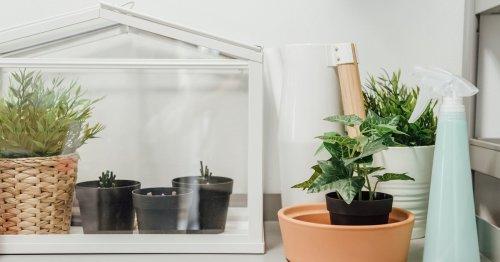 Ikea Socker: 12 einfallsreiche Upcycling-Ideen für das Mini-Gewächshaus