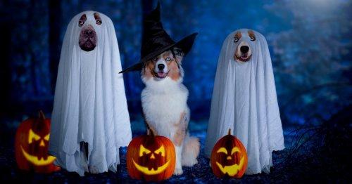 Hundekostüm Halloween: 9 schaurig schöne Outfits für unsere Vierbeiner