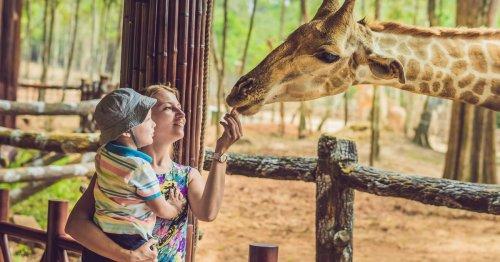 Unbedingt besuchen: Die 5 familienfreundlichsten Zoos in ganz Deutschland | familie.de
