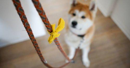Das solltet ihr beachten, wenn ihr einen Hund mit gelber Schleife seht   familie.de