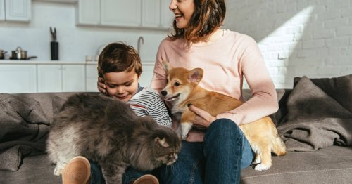 Nicht Hund oder Katze: Das ist das teuerste Haustier | familie.de