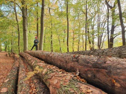 26 geniale Ausflüge im Bayerischer Wald mit Kindern