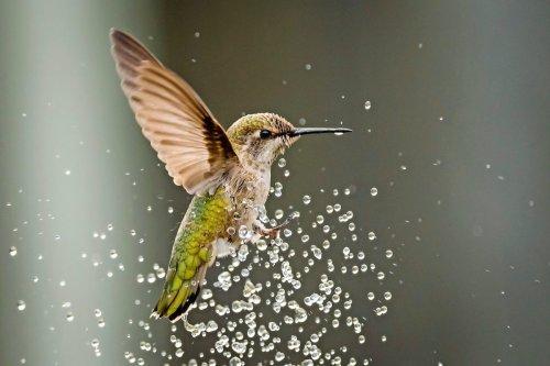 Make a DIY Hummingbird Mister Birdbath