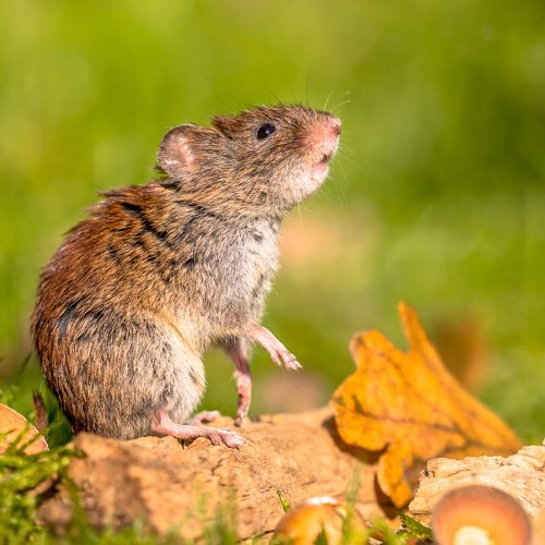 Best Ways to Get Rid of Rodents in Your House