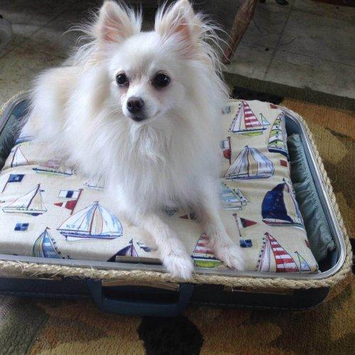 14 Adorable DIY Dog Beds