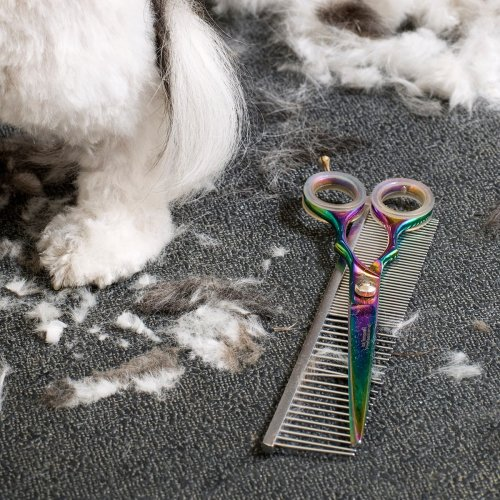 Essential Tools for DIY Dog Grooming