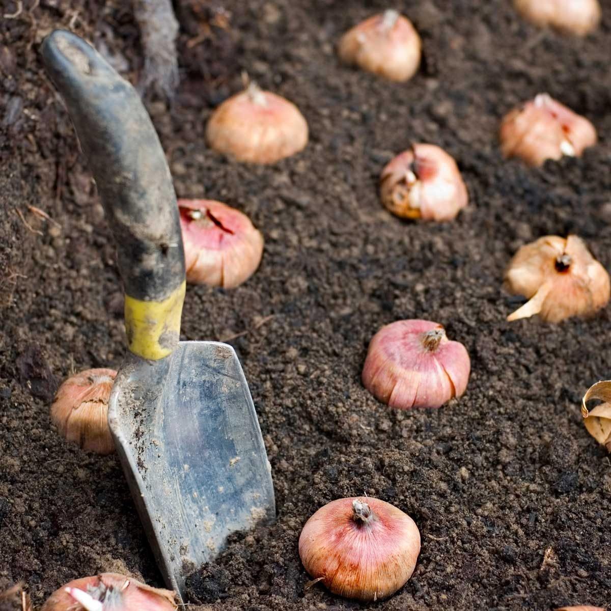 Things I Wish I Knew Before Planting Fall Bulbs