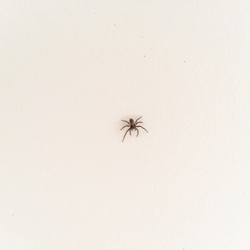 Homeowner's Guide to Spider Pest Control