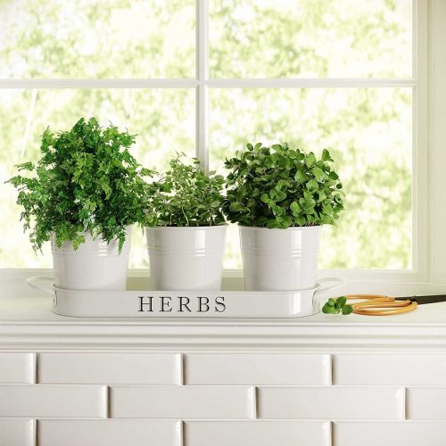10 Best Herb Garden Planters and Kits of 2021