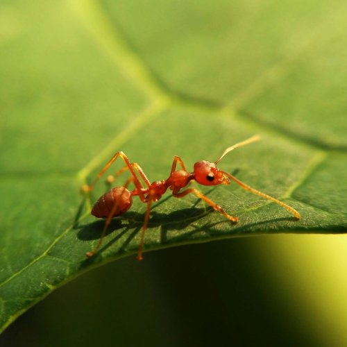 Are Ants Dangerous to People, Pets and Property?