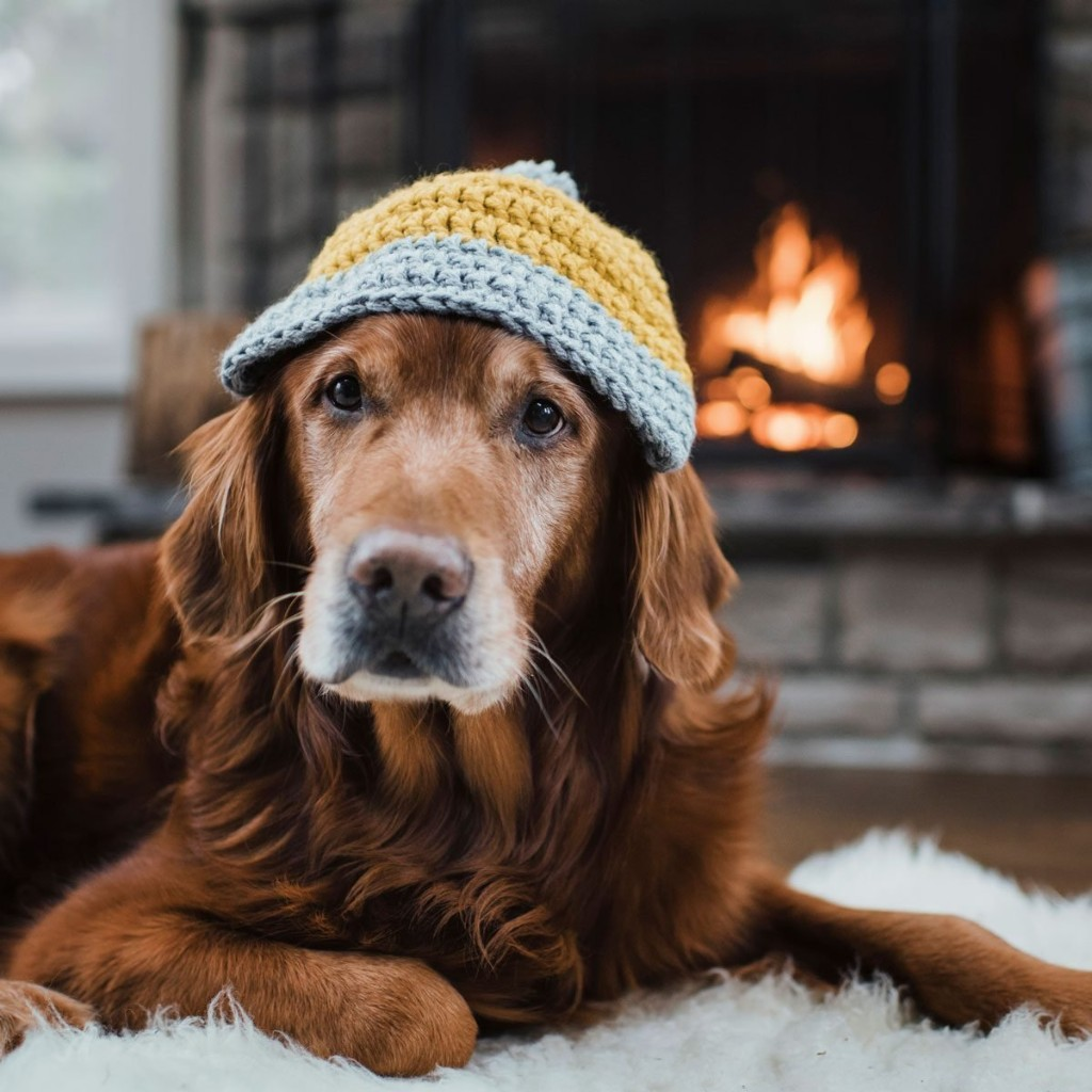 Tips for Keeping Your Pet Safe in Your home
