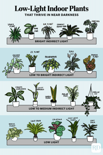 30 Low-Light Indoor Plants That Thrive in Near Darkness