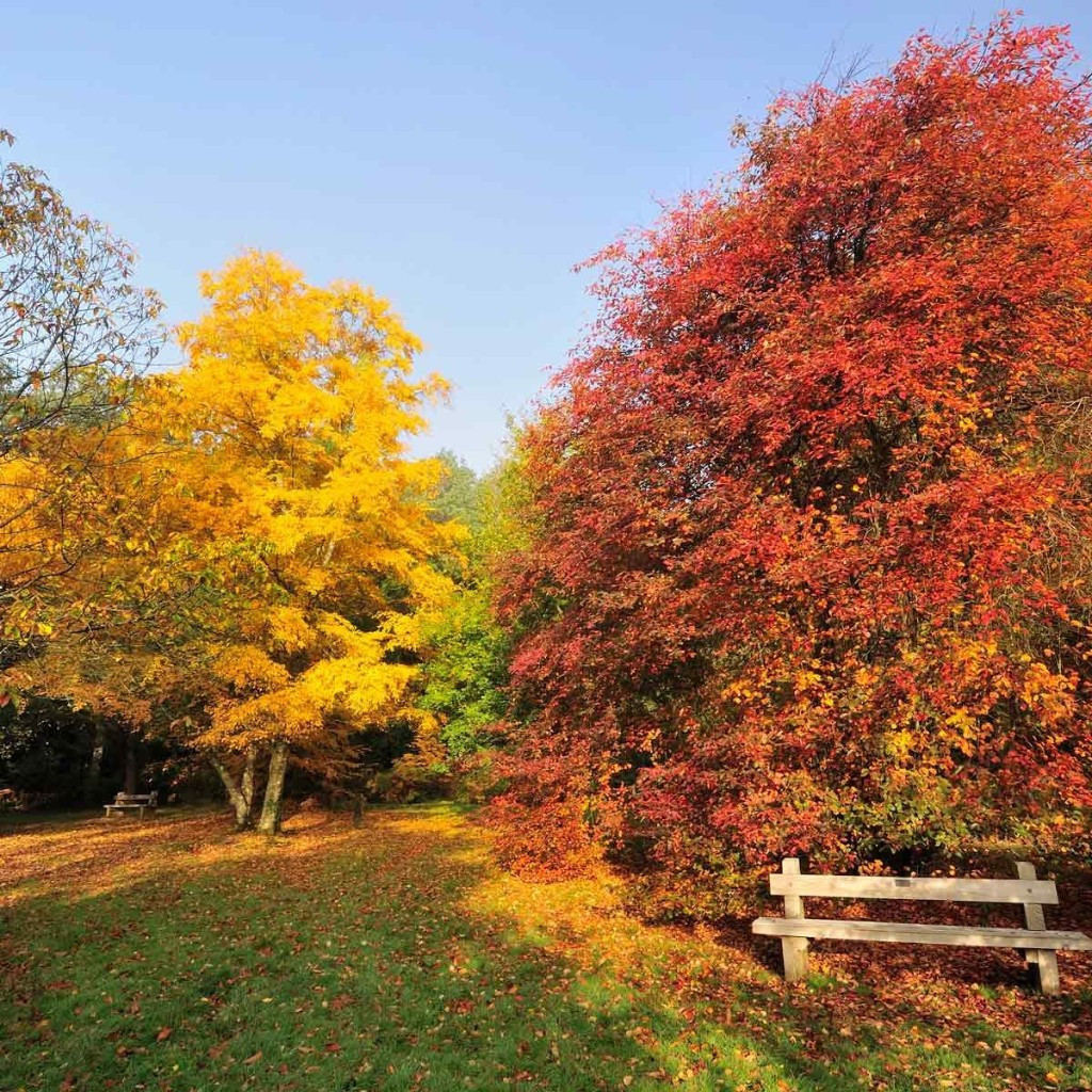 10 Things To Do With Your Yard Before Fall