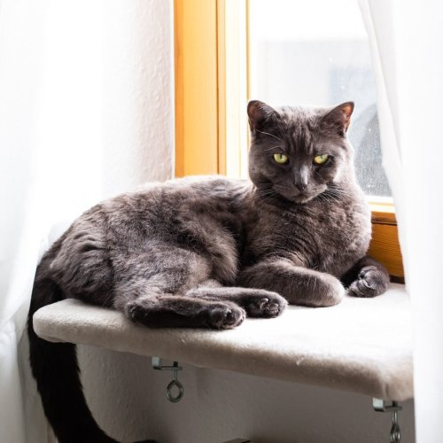 7 Best Cat Window Perches, Seats and Beds