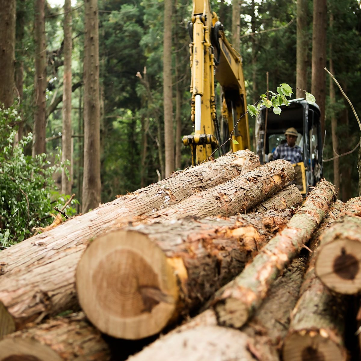 Lumber Prices Down Nearly 40 Percent From May Peak