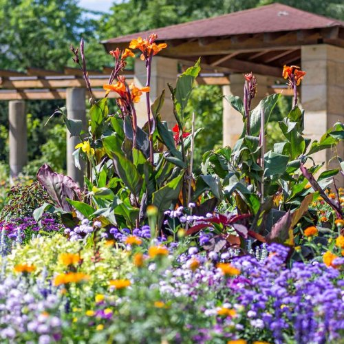 10 Tall Outdoor Plants for Landscaping
