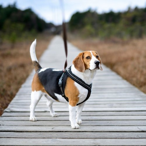 The 6 Types of Dog Harnesses